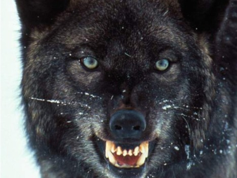 """True Blood"" Goes Fully Wolf for Their Wolf Men"