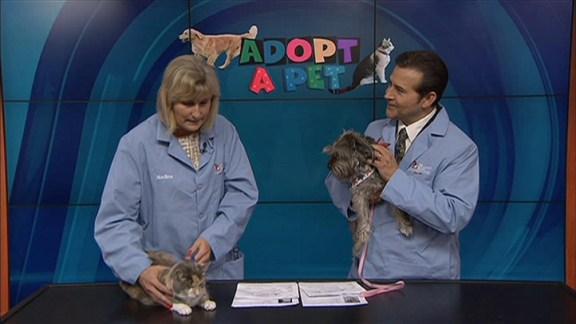 Adopt a Pet: June 29