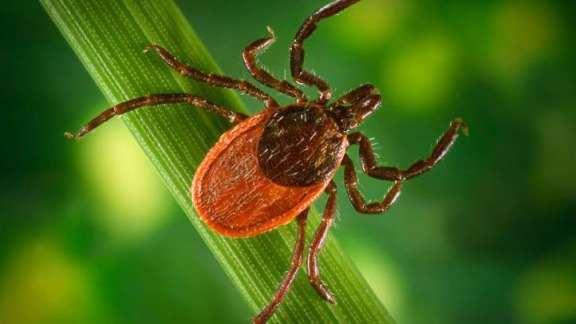 How to Reduce Risk of Infection from Ticks