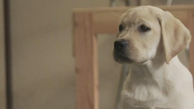 Tribeca Film Festival: Prison Dogs