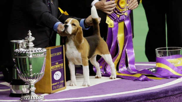 2015 Westminster Dog Show