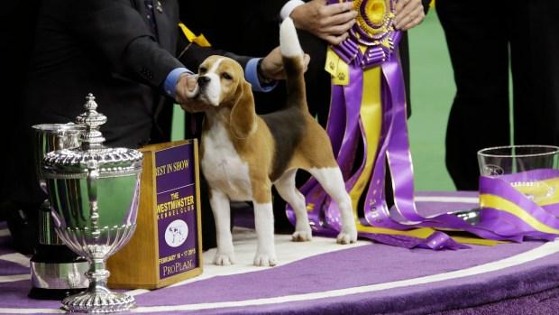 2015 Westminster Dog Show