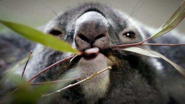 [NATL] Stunning Animal Photos From Around the World
