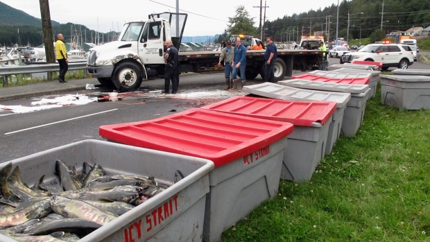 Unfortunate Truck Spills: Salmon Stream Onto Highway