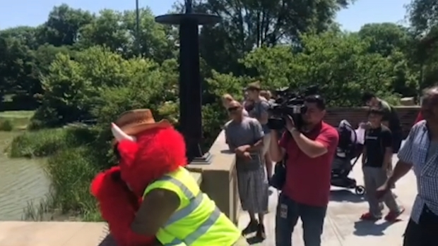 [CHI] Benny the Bull Arrives at Humboldt Park Lagoon to Watch for Gator