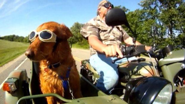 [NEWSC] Dog is My Copilot