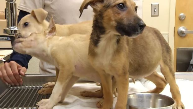 [NATL] 'Stuffed Animals': Three Puppies Survive After Being Left in Sealed Box