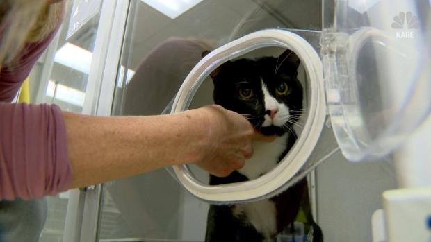 Cat Survives 45-Minute Washing Machine Cycle