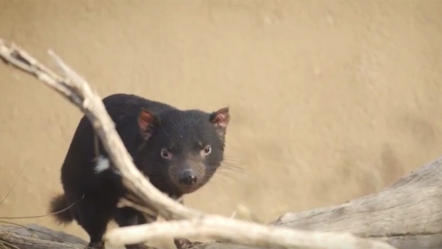 [G] San Diego's Cutest Critters