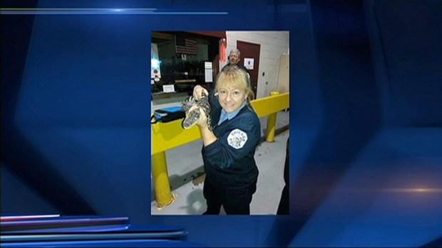 [CHI] Alligator Found in O'Hare Airport