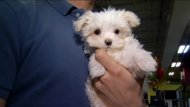 Puppies Stolen From Suburban Pet Stores