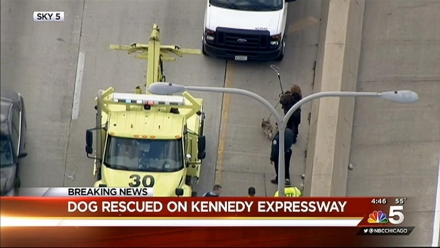 [CHI] Dog Rescued on Kennedy Expressway