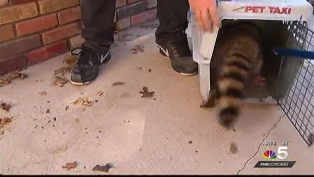 [CHI]Animal Control Sees Increase in Canine Distemper