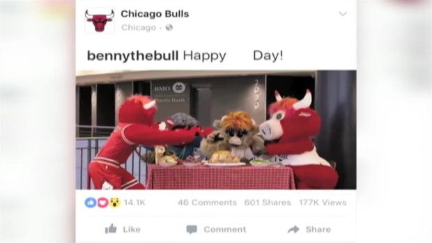 Benny the Bull Celebrates Thanksgiving