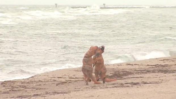 'Dinosaurs' Play During Hurricane Matthew