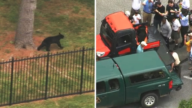 PHOTOS: Black Bear Lured From Tree, Evades Officers for Half-Hour Before Capture at NIH Campus