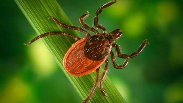 [CHI] Ticks Carrying Serious New Illness, Health Officials Say
