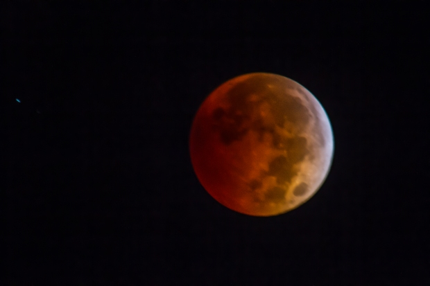 Blood Moon Over Chicago