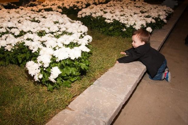 Sun Shines on Chicago Flower & Garden Show Benefit