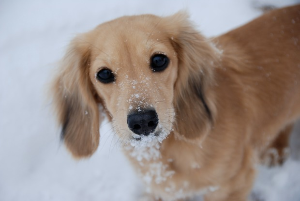 Chicago Pets in the Snow