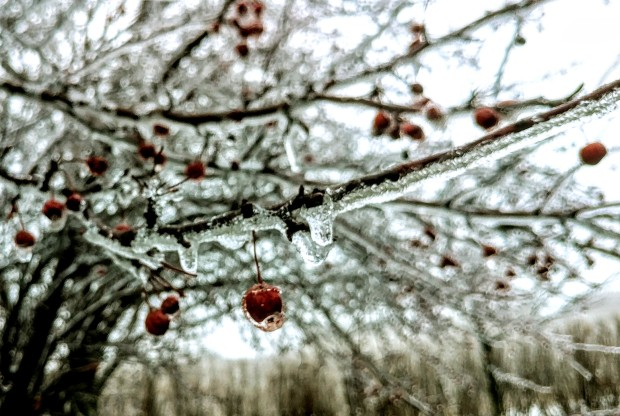 Gorgeous Photos of Nature Covered in Ice in Chicago Area