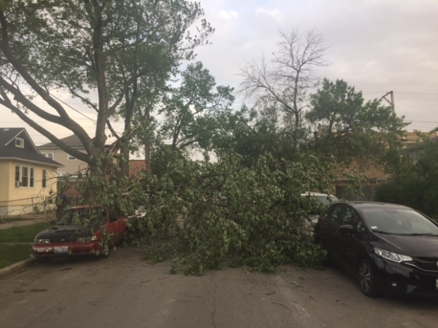 Photos: Foreboding Skies, Fallen Trees Amid Windy Weather