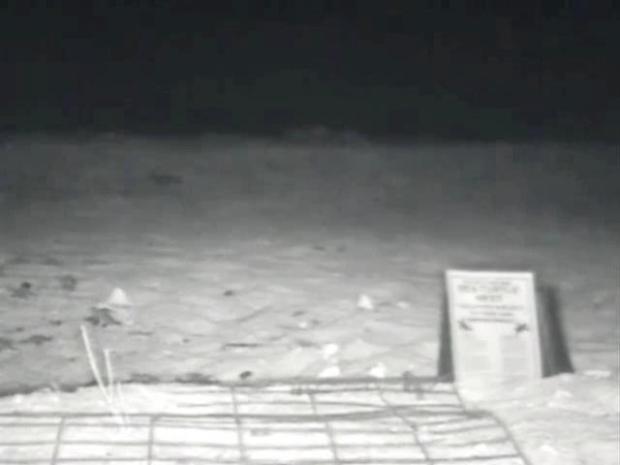 [MI] Webcam Records Loggerhead Turtles Hatching
