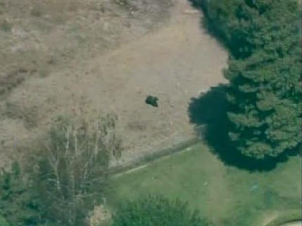 [LA] Dog Forces Bear Up Tree (RAW)
