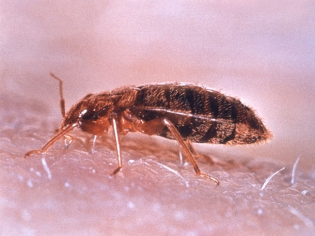 [CHI] Bedbugs Infest Mattress Stores, Says City
