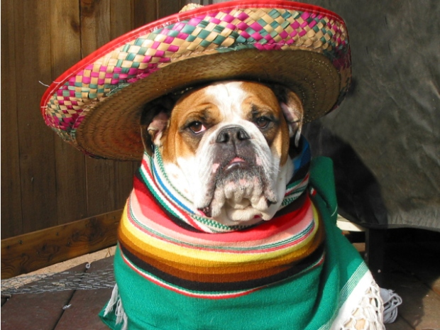 PHOTOS: Pets in Costumes