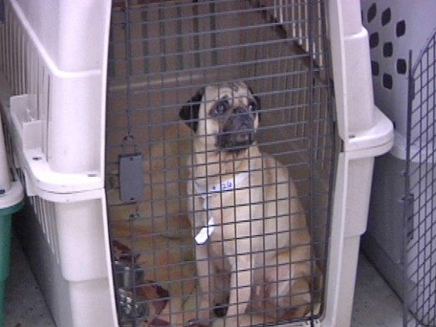 Dozens of Designer Dogs Rescued