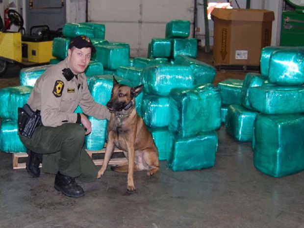 Over $9.3 Million in Pot Seized