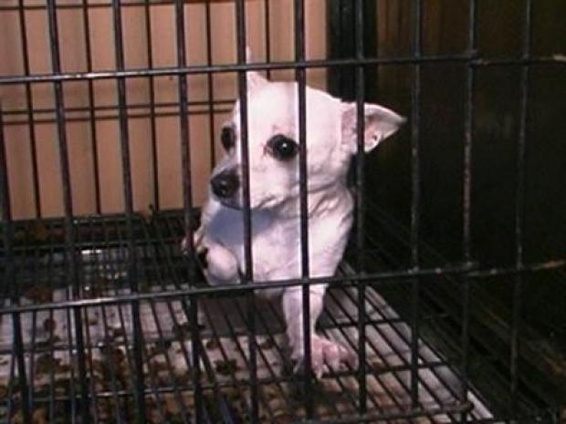 [CHI] Puppy Mill Busted in Cook County
