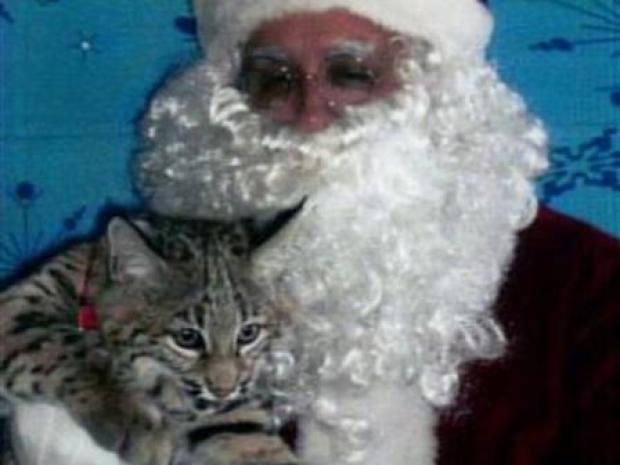 [PHI] Santa Clawed in Bobcat Attack