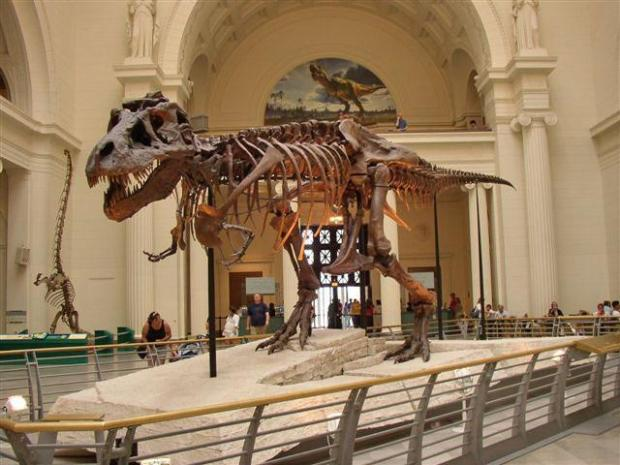 Field Museum Researchers Discover New Dinosaur Nbc Chicago
