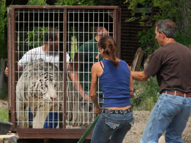 PHOTOS: Confiscated Tigers