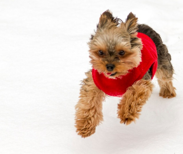 Pets Bundled Up in Chicago Cold