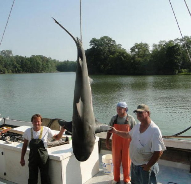 """Jaws"" in the Potomac"