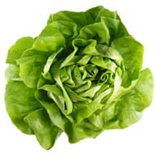[CHI] Lettuce Sue You