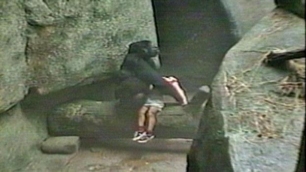 [CHI] From the Archives: Gorilla Protects Boy