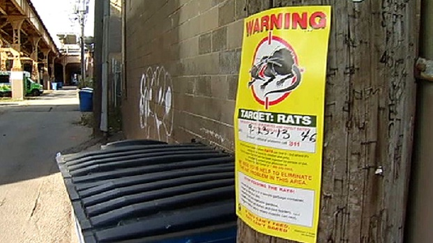 [CHI] Residents Say Rat Problem Getting Worse