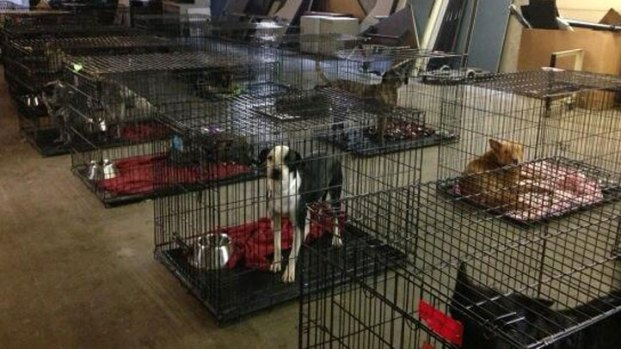 [DFW] Hundreds of Dogs Seized From Denton County Home