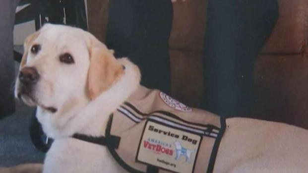 [NATL-NY] Guide Dog for President George H.W. Bush Is Returning to NY