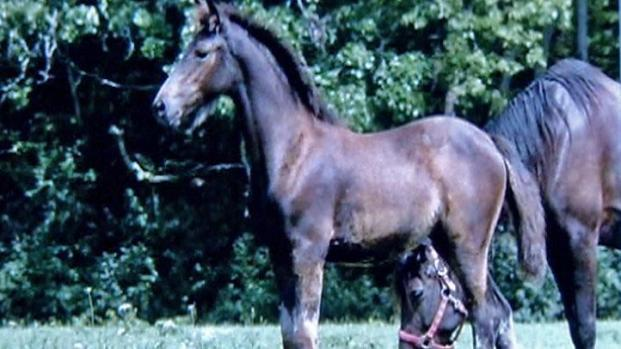 [CHI] Four Horses Stolen From Spring Grove Stable