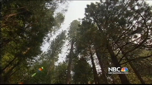 [BAY] Firefighters Hope to Gain Ground on Rim Fire, Now 20 Percent Contained
