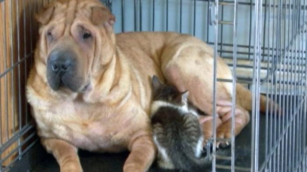 [NATL] Dog Becomes Stray Kitten's New Mother