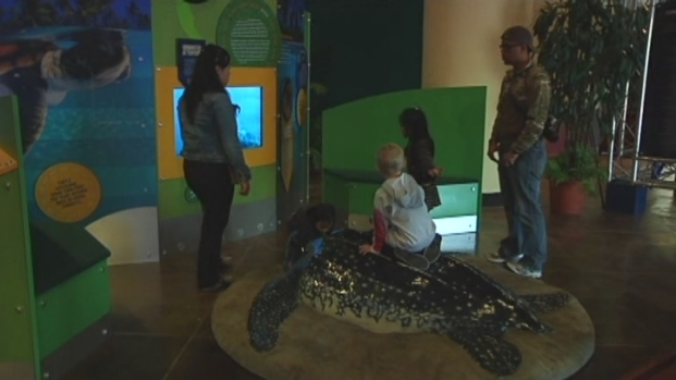 """[MI] """"Crittercam"""" Exhibit at Zoo Miami Shows World Through Eyes of Turtles, Penguins and Bears"""