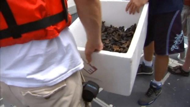 [MI] Sea Turtles Released in South Florida