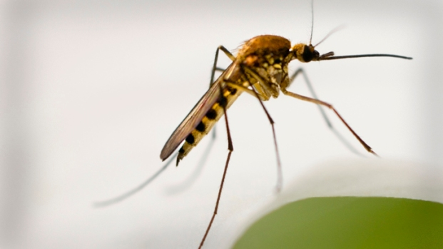 [CHI] Four Things That Make You a Mosquito Magnet