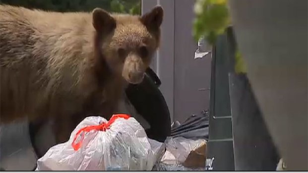 [PHOTOS UPDATED 9/1] Bear Sightings in Southern California